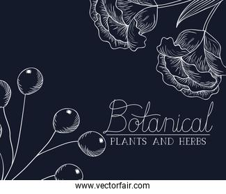 botanical label with plants and herbs