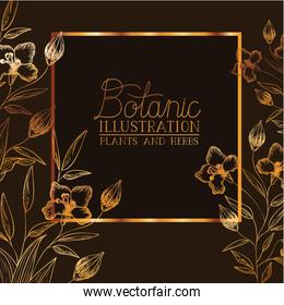 botanic illustration label with plants and herbs