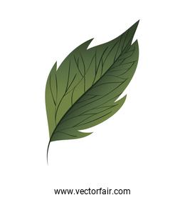 branch with leaf isolated icon