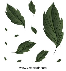 pattern of branch and leaf icon