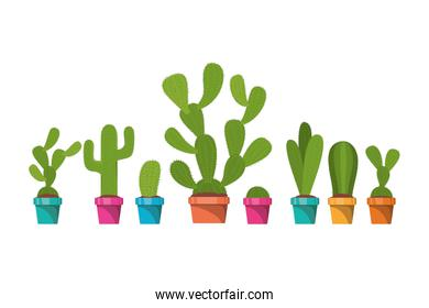 pattern cactus isolated icon