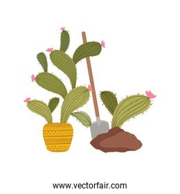 cactus to plant isolated icon