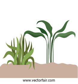plant in landscape isolated icon