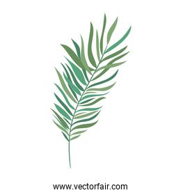branch with leaf of summer in white background