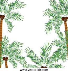 pattern of palm tree with coconut