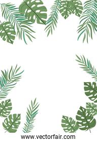 pattern of branch with leaf of summer in white background