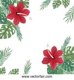 pattern of flower and leaves of summer
