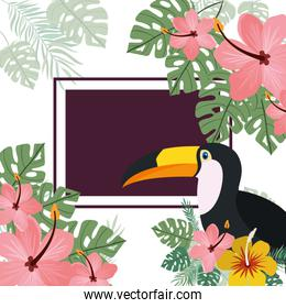 pattern of toucan and summer flower
