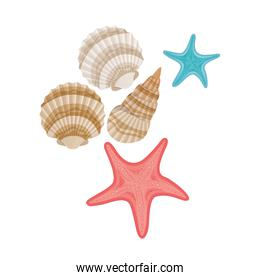 cute seashells on the sea in white background