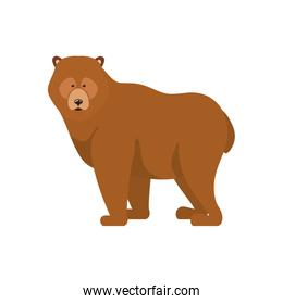 Isolated bear forest animal design