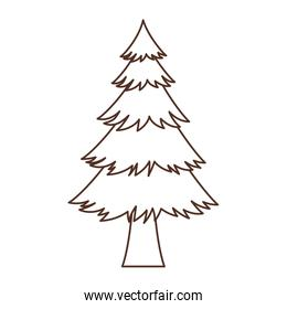 Isolated natural pine tree design vector illustration