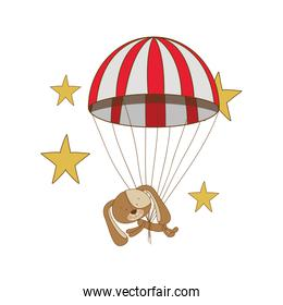 cute puppy with parachute in white background