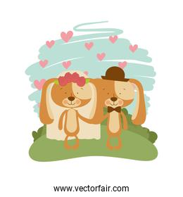 cute couple of puppies with landscape background
