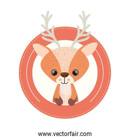 cute and adorable deer with circular frame
