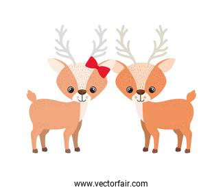 pretty couple of deers on white background