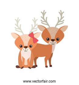 cute couple of deers on white background