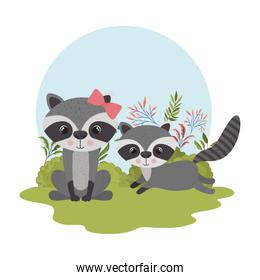 cute couple of raccoons with background landscape