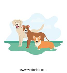 set of adorable dogs on white background