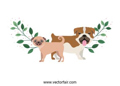 cute and adorable dogs on white background