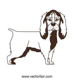 silhouette of cute cocker spaniel ingles dog on white background