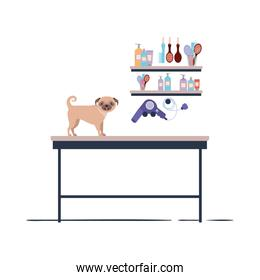 dog on hairdressing table with white background