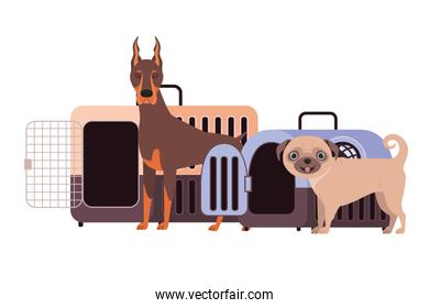 dogs and pet transport boxes on white background