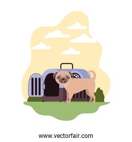 dog and pet transport box with background landscape
