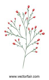 branch with seeds decorative icon