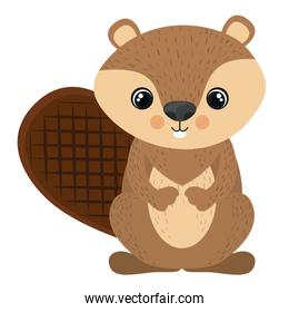 Isolated beaver cartoon design