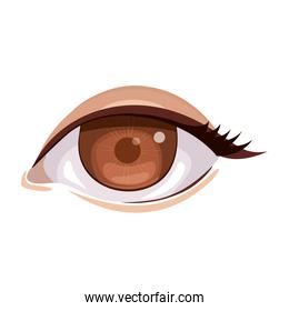 Isolated eye and look concept