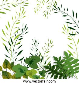 Nature and tropical leaves design