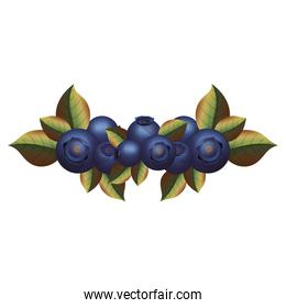 Isolated blueberry fruit with leaves design