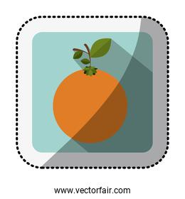 color square with middle shadow sticker with orange fruit