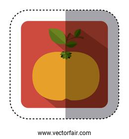 sticker of square button with colorful tangerine fruit