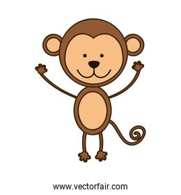 colorful picture cute monkey animal