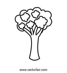 silhouette vegetable broccoli icon