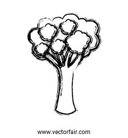 contour vegetable broccoli icon