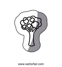 figure vegetable broccoli icon