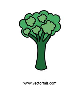 colorful vegetable broccoli icon