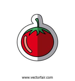 color vegetable tomato icon