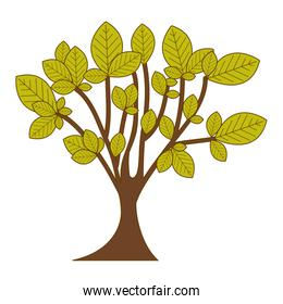 green leafy tree with trunk nature icon