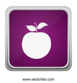 violet square button relief with silhouette apple fruit
