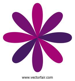 purple flower formed by some petals