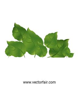 green leaves together icon