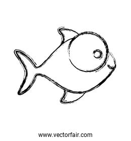 contour fish with big eyes icon