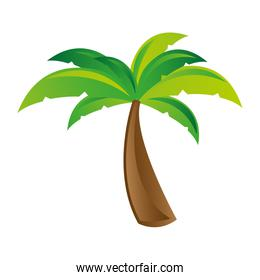 white background with palm tree