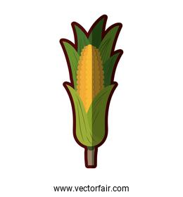 light colors of corn cob with leaves with thick contour