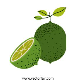 white background with one lemon fruit and half lemon cut and without contour