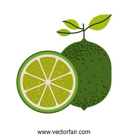 white background with one lemon fruit and lemon slice and without contour