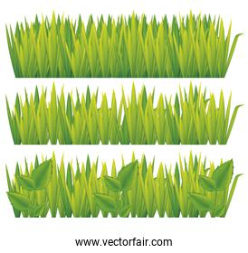 green grass isolated icons
